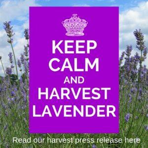 http://www.carshaltonlavender.org/wp-content/uploads/2019/05/Carshalton-Lavender-2019-Press-Release.pdf