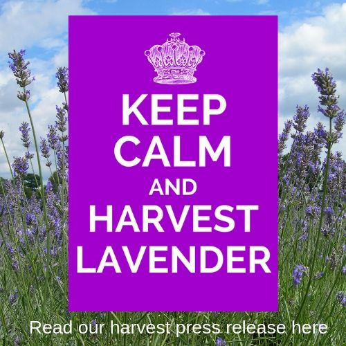 https://www.carshaltonlavender.org/wp-content/uploads/2019/05/Carshalton-Lavender-2019-Press-Release.pdf