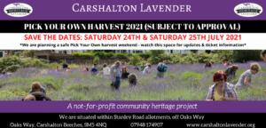 Pick Your Own Lavender Harvest